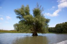 Channel In The Danube Delta, Romania Stock Images