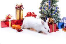 Free Rabbit Stock Photography - 17439132
