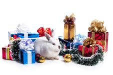 Free Rabbit Royalty Free Stock Photography - 17439167
