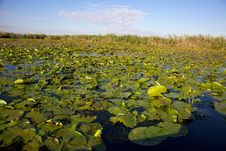 Channel In The Danube Delta, Romania Stock Image