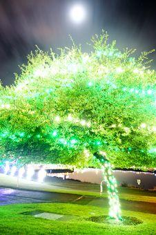 Free Green Tree Illuminated Royalty Free Stock Images - 17442809