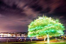 Free Green Tree Illuminated Royalty Free Stock Photo - 17442845