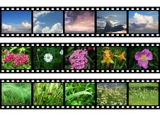 Free Films With Images Of Nature Royalty Free Stock Image - 17443886