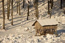 Free Winter Pasturage Stock Photos - 17446913