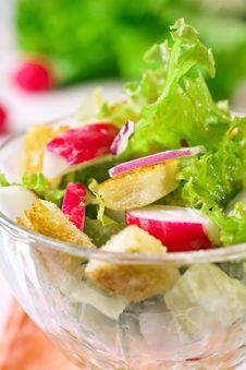 Free Tasty Salad Stock Image - 17447991