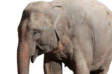 Free Elephant Stock Photography - 17448332