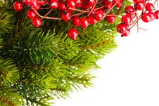 Free Branch Of Christmas Tree Stock Photo - 17449120