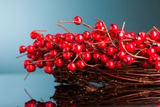 Free European Holly Royalty Free Stock Images - 17449459