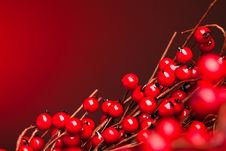 Free European Holly On Red Stock Photography - 17449492