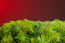 Free Branch Of Christmas Tree Royalty Free Stock Image - 17449506