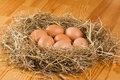 Free Fresh Eggs In Hay Stock Images - 17452074