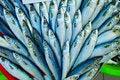 Free Fisch Stock Photo - 17455160