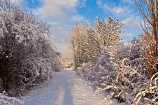 Trees In Winter In Snow Stock Images