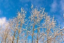 Free Trees In Winter In Snow Stock Photos - 17450323
