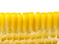 Free Fresh Corn Stock Images - 17451484