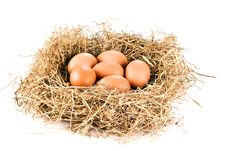 Free Fresh Eggs In Hay Royalty Free Stock Photography - 17452117