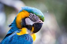 Free The Blue Parrot Royalty Free Stock Photography - 17453737