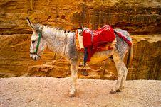 Free Donkey Stock Images - 17455564