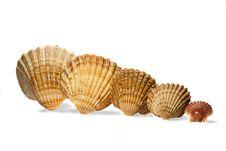 Several Seashells Royalty Free Stock Photography