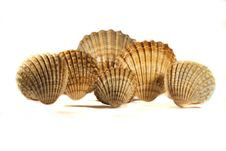 Free Seashells Stock Photography - 17456172