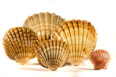 Free Seashells Royalty Free Stock Photo - 17456185