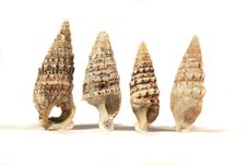 Free Group Of Seashells Stock Photography - 17456212