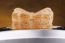 Free Toaster Royalty Free Stock Images - 17456539