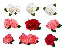 Free Set Of A Beautiful Roses On A White Background. Stock Photo - 17457170