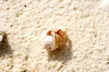 Free Crab In The Sea Shell Royalty Free Stock Photography - 17458547