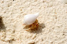 Free Crab In The Sea Shell Stock Photography - 17458582