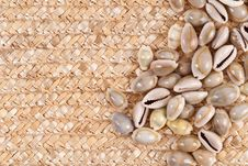 Free Sea Shell Background Image Royalty Free Stock Images - 17459579