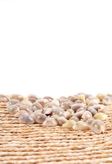 Free Shells On A Basket Stock Photography - 17459582