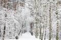 Free Snow Covered Forest - Winter Impression Royalty Free Stock Photos - 17460518