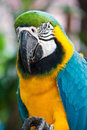 Free Macaw Stock Photo - 17464960