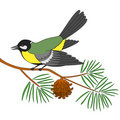 Free Titmouse On A Pine Branch Stock Images - 17466734