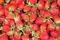 Free Strawberry Royalty Free Stock Photos - 17467208