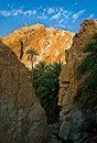 Free Oasis In Tunisia Stock Image - 17469081