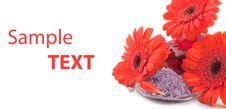 Free Sea Salt With Gerbera Flowers Royalty Free Stock Image - 17460026