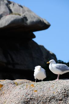 Free Seagulls Stock Images - 17460314