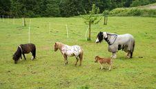 Free Sleeping Horses Royalty Free Stock Image - 17460546