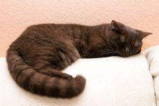 Free Cat Sleeps On Sofa Stock Image - 17460931