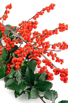 Free Holly Berry On White Background Royalty Free Stock Photos - 17461058