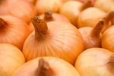 Free Onion Background Royalty Free Stock Images - 17463659