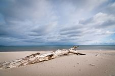 Free Driftwood On A Beach With Cloudy Sky Stock Photos - 17464603