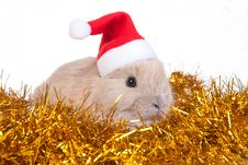 Free Brown Rabbit And Christmas Decoration, Isolated Stock Photos - 17465403