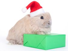 Brown Rabbit In Santa Hat And Christmas Box, Iso Stock Photo