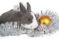 Free Gray Rabbit And Christmas Decoration, Isolated Royalty Free Stock Image - 17465526