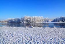 Free Snow Bushes Stock Photo - 17469650