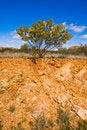 Free Australian Outback Royalty Free Stock Photo - 17472255