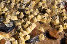 Free Coastal Marine Organisms Stock Image - 17470391